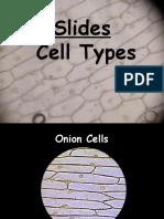 Lab Slides Cell Types