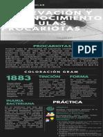 INFOGRAMA4-Observacion Procariotas