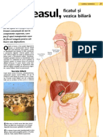 Pancreasul Ficatul Si Vezica Biliara