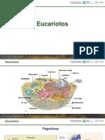 Aula 2 - Eucariotos - Fungos
