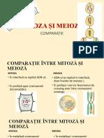 Diviziunea Celulara Mitoza vs Meioza