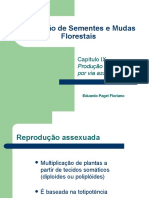 3.2-ProducaoDeMudasPorViaAssexuada