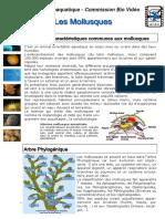 Cours Biologie Marine Mollusques Ppt Ligne
