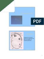 C - Estructura del espermatozoide
