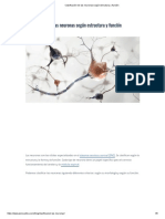 Clasificación de las neuronas según estructura y función