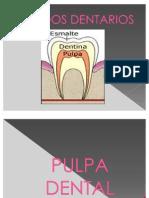 PULPA_DENTAL