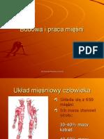 Budowa i praca mięśni