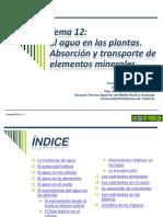 Tema 12 Transporte en el xilema