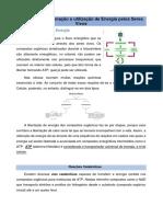 Tema 3 - Biologia pdf