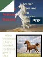 Story Of Arabian Horses