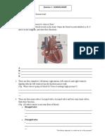 C1-human heart