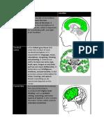 inside the human brain