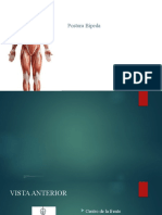 4. Postura Bipeda