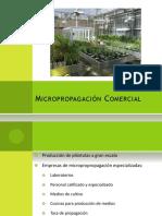 Clase15-CT- Micropropagación Comercial-EM17 (1)