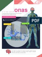 M16_S3_Las_neuronas_PDF_interactivo