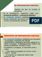 2. PRINCIPIOS DE PROPAGACIÓN POR ESTACAS-convertido