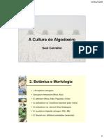 Algodao 2 Botanica e Morfologia