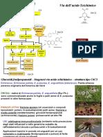 Droghe fenilpropanoidi-fenoli-tannini-flavnoidi
