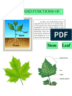 PARTS AND FUNCTIOND OF PLANTS