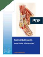 02_03_04_Anatomie_Knochen_Muskeln_Allgemein