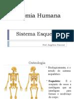 Anatomia  Humana (Osteologia)