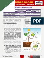 SEMANA 27 - LA NUTRICIÓN DE LAS PLANTAS [2do CIENCIA Y TECNOLOGÍA]