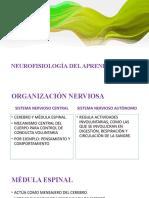 NEUROFISIOLOGÍA DEL APRENDIZAJE