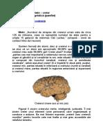 Jocuri de cuvinte - creier