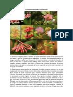 La Diversidad de Las Plantas