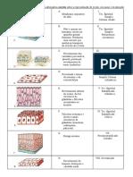 Biologia Tecidos