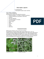 Cultivo Industrial de La Menta Inglesa o Piperita
