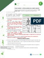 pauta guia de huesos y articulaciones