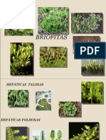 Briófitas 2 - classificação