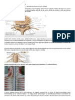 Estructura Macro de la médula espinal
