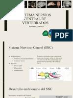 COMPARACION DE SNC EN VERTEBRADOS E INVERTEBRADOS 2