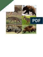 ANIMALES CARNIVOROS