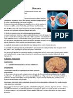 6. Cancer de Ovario