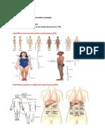 Resumo Matéria Teórico-Práctica Anatomia
