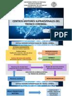 CENTROS MOTORES SUPRAESPINALES DEL TRONCO CEREBRAL DEFINITIVO