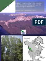 Whitebark Pine Die off Aerial Assessment
