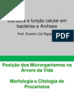 estrutura-e-funcao-celular-em-bacterias-e-archaea