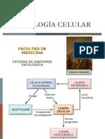 1 PATOLOGIA CELULAR-ADAPTACION CELULAR (1)