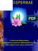 Plant Growth & Differentiation