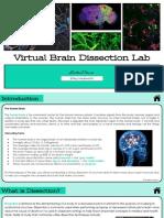 virtual brain dissection lab--hackworth ellary
