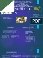 tema 1, nutricion y alimetacion animal seccion B