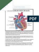 9. Actividad Eléctrica Del Corazón