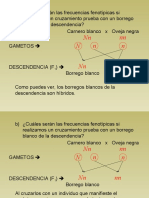 18 Problemas de Genetica Resueltos_parte2