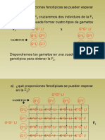 18 Problemas de Genetica Resueltos_parte5
