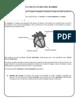 aparato circulatorio secundaria
