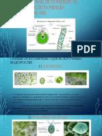 Биология «Одноклеточные и Многоклеточные Водоросли»